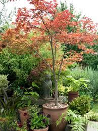shade trees for small gardens cori matt garden