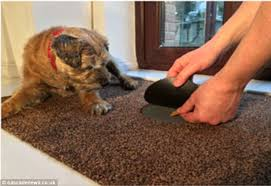 David Low The Doormat Paws And Go Dog Doormat Teaches Your Pet To Wipe Its Own Paws With