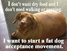Weiner Dog Meme - fat dachshund imgur