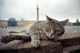 8 compelling cats that changed russian culture russia beyond