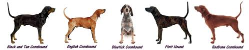 bluetick coonhound name origin worldly dogs u0027 blog worldly dogs