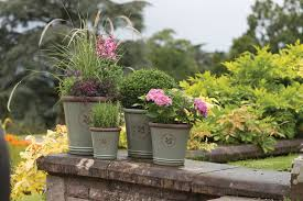 Winter Patio Plants by How To Care For Container Gardens In Cold Weather The English Garden