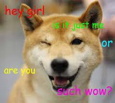 Doge Girl Meme - shiba inus hey girl jpg