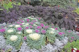 edible ornamentals and ornamental edibles farm forum