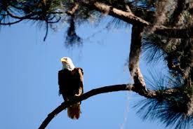 birds of the bible trees and birds s birdwatching adventures