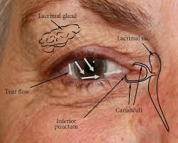 Eye Ducts Anatomy Socket Anatomy New Zealand Prosthetic Eye Service