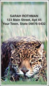 defenders of wildlife big cats contact cards contact cards