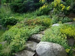giardini rocciosi in ombra giardino roccioso