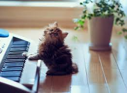Cat Playing Piano Meme - 30 most adorable and cutest cat photos collection vote for the