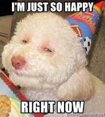 Happy Dog Meme - article 954 really happy dog meme investingbb