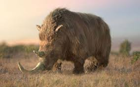 image result wooly rhino size prehistoric wooly rhino