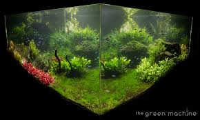 huge aquascape tutorial step by step spontaneity by james findley