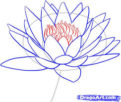 how to draw a water lily step by step flowers pop culture free