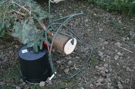 u cut u0026 fresh christmas trees lee farms in tualatin or