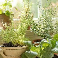Indoor Herb Garden Kit 45 Best Indoor Herb Garden Images On Pinterest Indoor Herbs