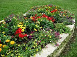 flowers flower garden pictures