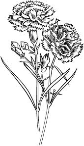 421 best flower coloring images on pinterest drawings coloring