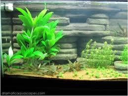 Dramatic Aquascapes Dramatic Aquascapes Diy Aquarium Background Andrew Coats In
