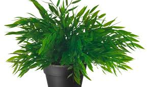 the best indoor plants plant wonderful best fake plants best indoor palm trees indoor