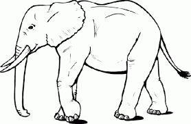 draw an elephant here s another elephant to try luck