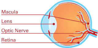 diabetic retinopathy prevent blindness