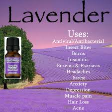 lavender oil for image gallery hcpr