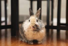 Cool Pets Rabbit Hutch Housing Your Rabbit Indoors Rabbit Cages Bunny Condos