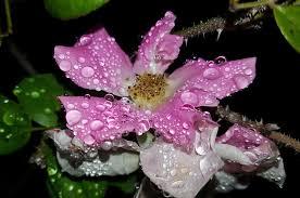 garden photography u2013 tips for capturing the gardens splendour