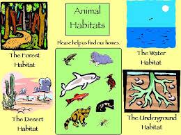 animal habitats for the classroom pinterest animal habitats