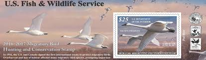 where to buy duck u s fish wildlife service migratory bird program conserving