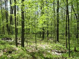 Wisconsin forest images Waupaca county wisconsin forests hunting timber land jpg