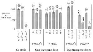 autoregulation of transformer 2 alternative splicing is necessary