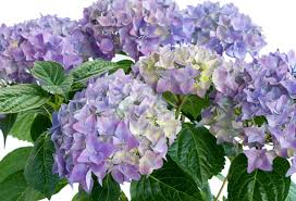 funeral flower etiquette the meaning 8 different types of popular funeral flowers
