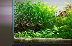 Aquascaping Plants Layout 22 George Farmer Tropica Aquarium Plants