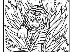 tiger coloring pages u0026 printables education com