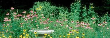 native plant database grow native