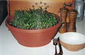 micro greens garden sense daily dish magazine