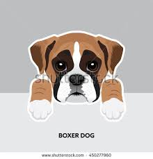 vector illustration portrait boxer dog puppy stock vector