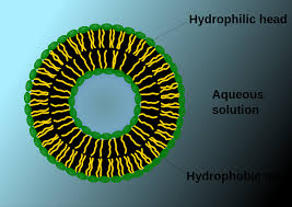 nanoparticles for dermal and transdermal drug delivery intechopen