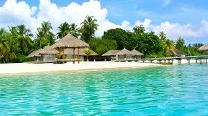 tropical bounce house water slide and pool combo idolza
