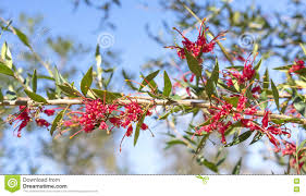 australian garden flowers australian southern coast with native plants with white flowers