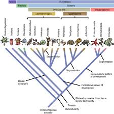 biology eukaryotic kingdoms shmoop biology