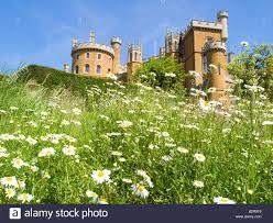 Castle Backdrop Belvoir Castle As A Backdrop For Pretty Daisy Wildflowers Stock
