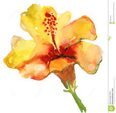Yellow Hibiscus Flowers - watercolor yellow hibiscus royalty free stock images image