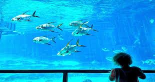 japanese aquarium horror more than 1 000 fish found dead at japanese aquarium