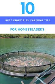 10 must know fish farming tips for homesteaders