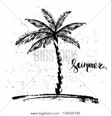 rough ink drawing sketch tropical vector u0026 photo bigstock