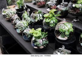 terrarium plant stock photos u0026 terrarium plant stock images alamy