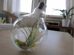 in light bulbs ten incredible planters created from old light bulbs recyclenation
