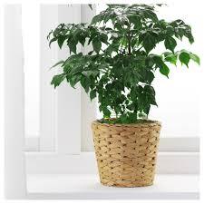 fridfull plant pot ikea